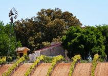 ¿Qué es el vino ecológico y cuáles son sus características?